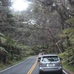 ハワイ旅行記9